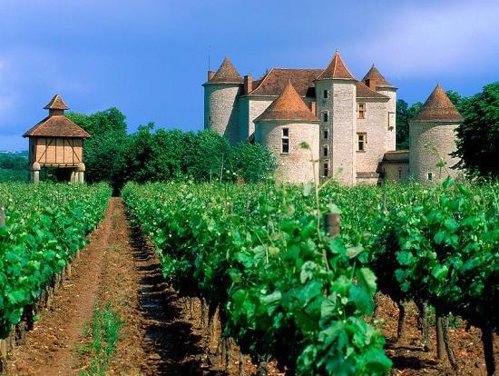 Бургундия, виноградники