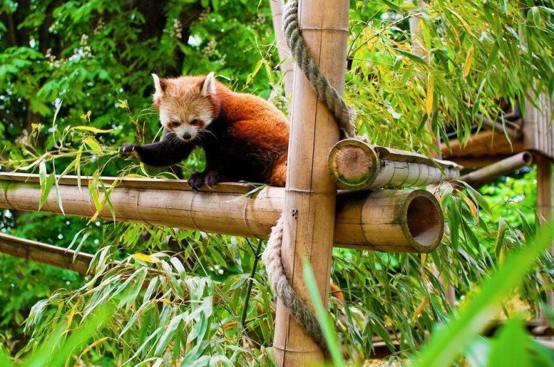 Уголок природы, Венсенский зоопарк