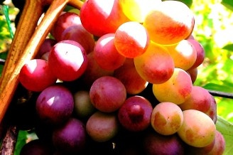 Бум на покупку французских виноградников