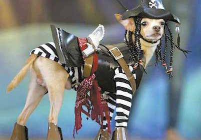 Собачья мода в Париже